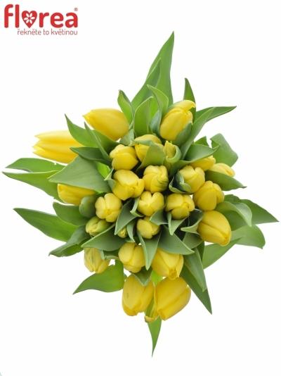 Kytice 25 žlutých tulipánů STRONG GOLD