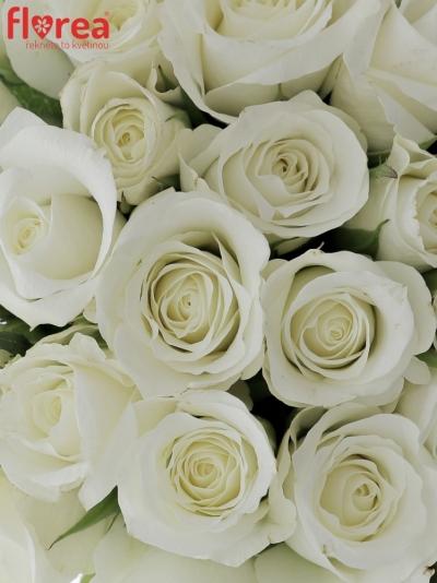 Kytice 35 bílých růží AKITO