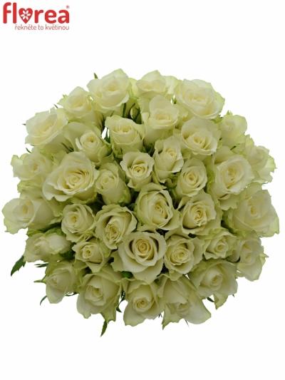 Kytice 35 bílých růží ATHENA 60cm