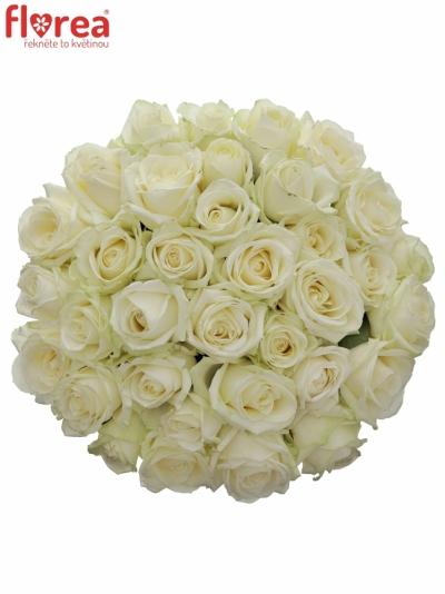 Kytice 35 bílých růží AVALANCHE+ 50cm
