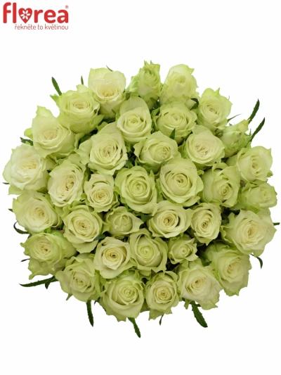 Kytice 35 bílých růží MURU 60 cm