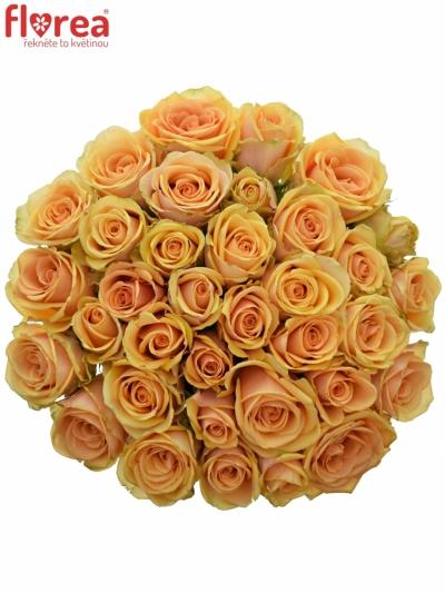 Kytice 35 čajových růží ALCHEMY