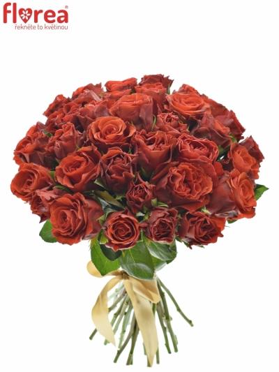 Kytice 35 červených růží EL TORO 30cm