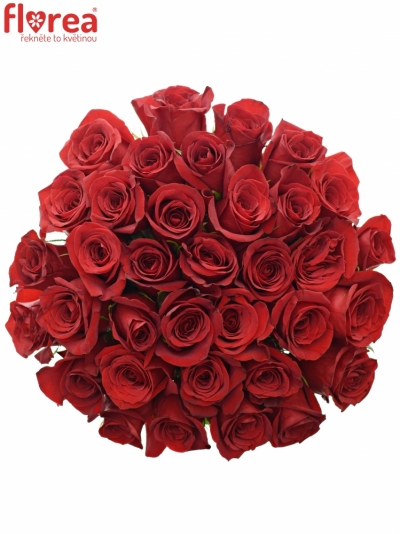 Kytice 35 červených růží  FREEDOM 90cm