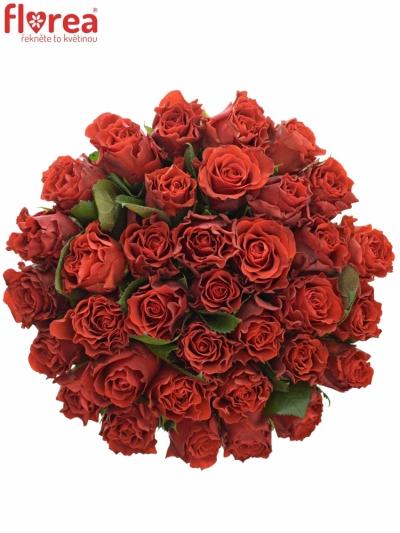 Kytice 35 červených růží RED CORVETTE 60cm