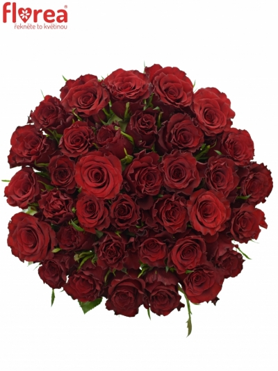 Kytice 35 červených růží RED DRAGON 60cm