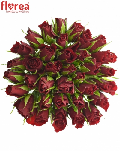 Kytice 35 červených růží VALENTINO 40cm