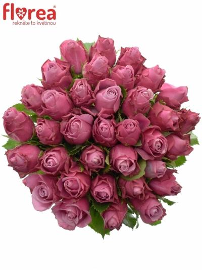 Kytice 35 fialových růží DEEP WATER 40cm