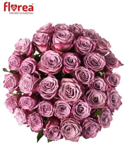 Kytice 35 fialových růží MARITIM