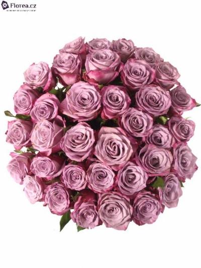 Kytice 35 fialových růží MOODY BLUES 80cm