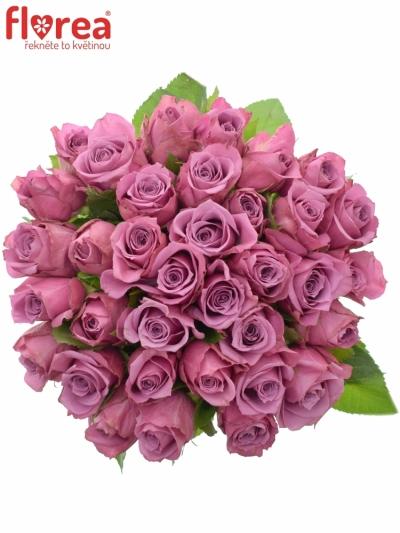Kytice 35 fialových růží NEW ORLEANS 50cm