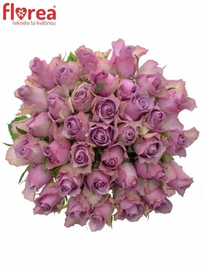 Kytice 35 fialových růží NIGHTINGALE 50cm