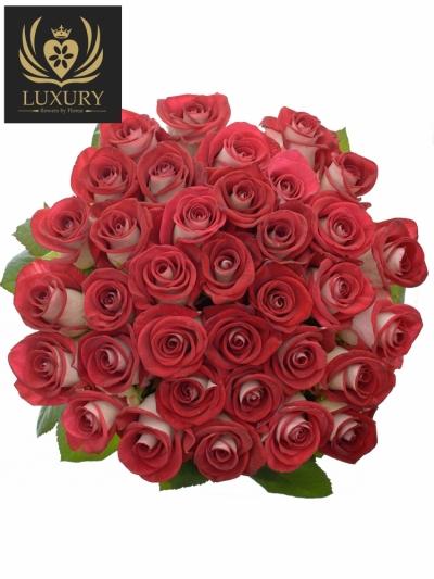 Kytice 35 luxusních růží BLUEZ+ 70cm