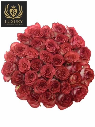 Kytice 35 luxusních růží DIABOLO 70cm