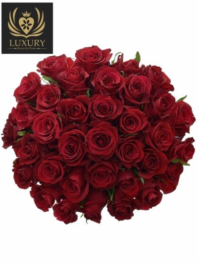 Kytice 35 luxusních růží EVER RED 60cm