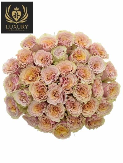 Kytice 35 luxusních růží MABELLA 60cm