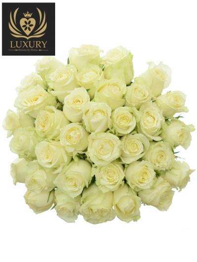 Kytice 35 luxusních růží QUEEN OF AFRICA XL 50cm