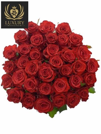 Kytice 35 luxusních růží RED EAGLE 90cm