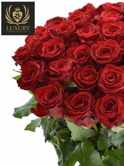 Kytice 35 luxusních růží RED EAGLE