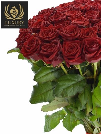 Kytice 35 luxusních růží TESTAROSSA