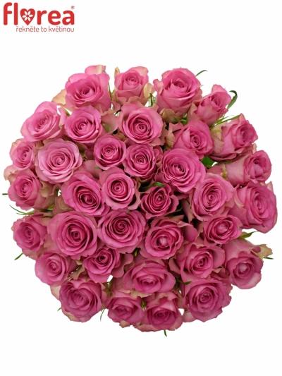 Kytice 35 růžových růží ROYAL JEWEL 60cm