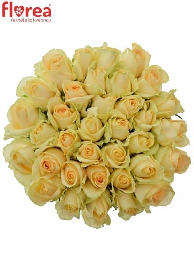 Kytice 35 meruňkových růží MAGIC AVALANCHE 60cm