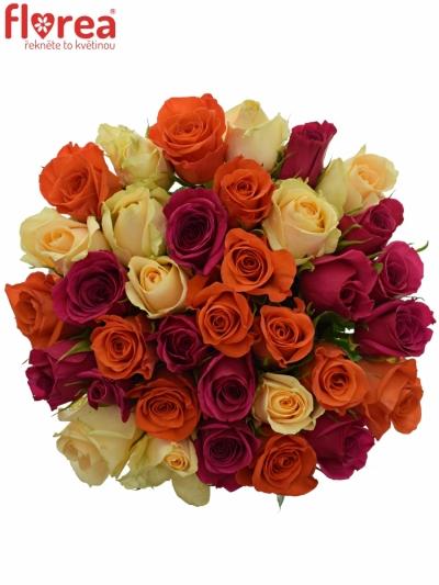 Kytice 35 míchaných růží KIMI CANDRA 60cm