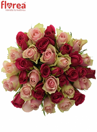 Kytice 35 míchaných růží LILA CANDRA 60cm