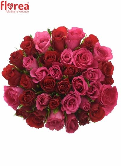 Kytice 35 míchaných růží GRACIANA 35cm