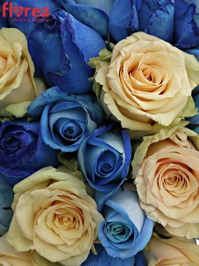Kytice 35 míchaných růží SKYLA 50cm
