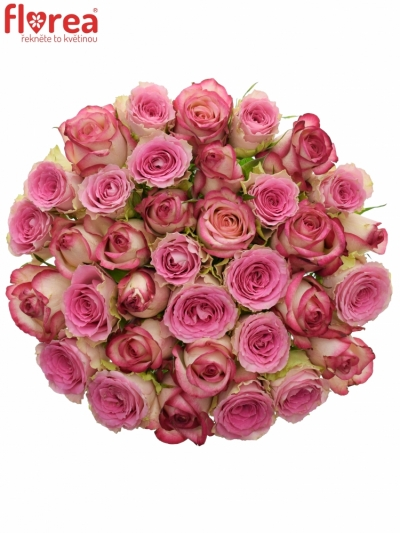 Kytice 35 míchaných růží TIMESTELLE 50cm