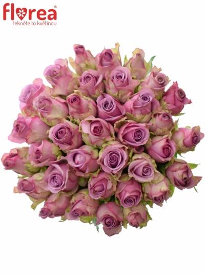Kytice 35 modrofialových růží COOL WATER 50cm