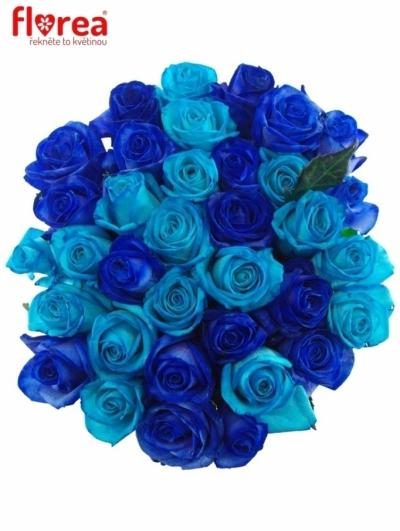 Kytice 35 modrých růží BLUE ADRIANA