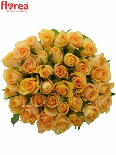 Kytice 35 oranžových růží CANDID PROPHYTA 50cm