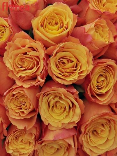 Kytice 35 oranžových růží CONFIDENTIAL 35cm