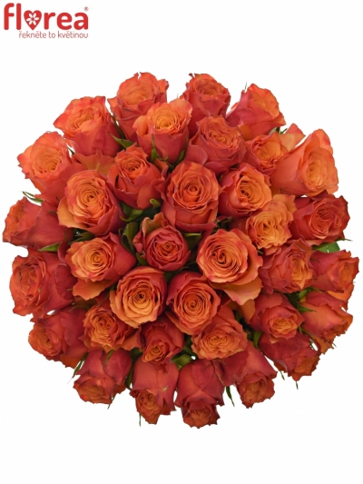 Kytice 35 oranžových růží DEVOTED