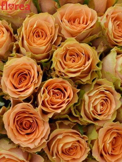 Kytice 35 oranžových růží FLORENTINE
