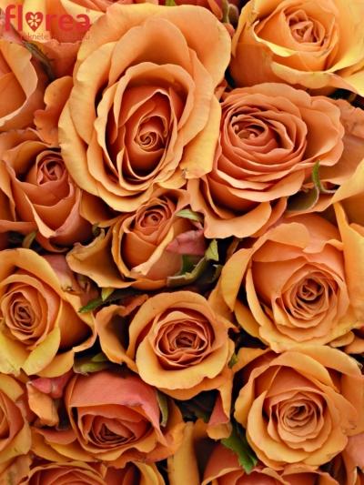 Kytice 35 oranžových růží JULIA 40cm