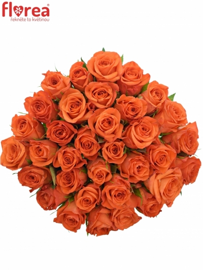 Kytice 35 oranžových růží PATZ 60cm