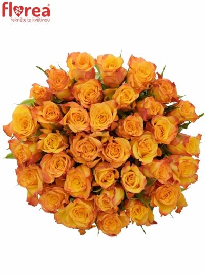 Kytice 35 oranžových růží TIEBREAK 60cm
