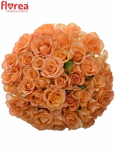 Kytice 35 oranžových růží TRIXX!