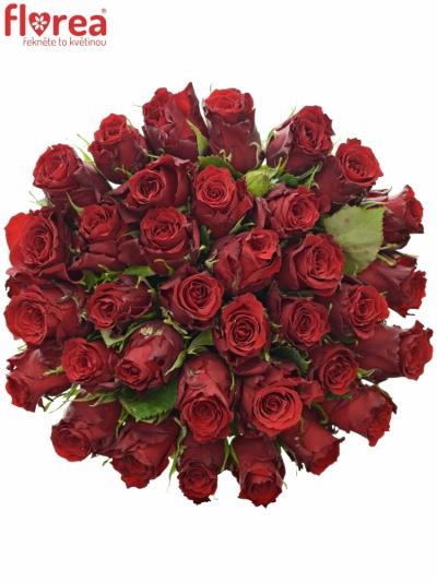 Kytice 35 rudých růží RED TORCH 70cm