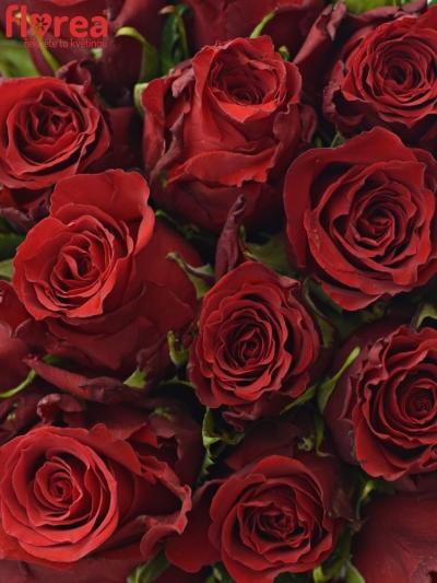 Kytice 35 rudých růží RED TORCH