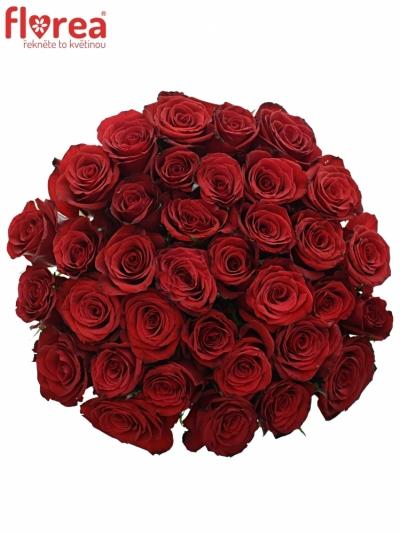 Kytice 35 růží PRESTIGE 60cm