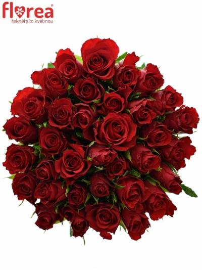 Kytice 35 červených růží RED CALYPSO 50cm