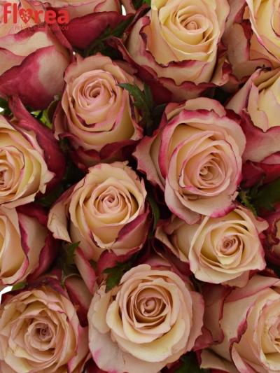 Kytice 35 růží ROSA ADVANCE SWEETNESS