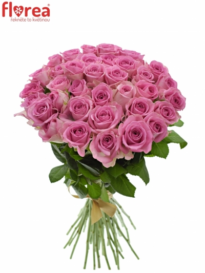 Kytice 35 růžových růží AQUA 40cm