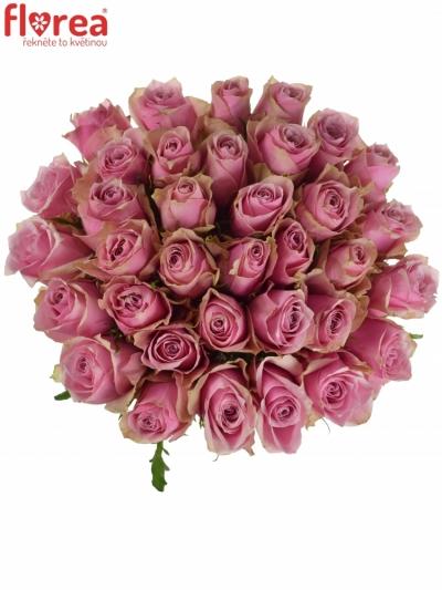 Kytice 35 růžových růží ATHENA ROYALE
