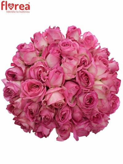 Kytice 35 růžových růží AVALANCHE CANDY+ 60cm