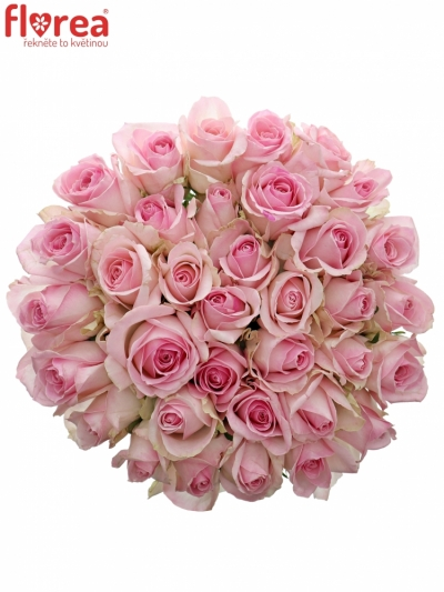 Kytice 35 růžových růží AVALANCHE SORBET+ 70cm